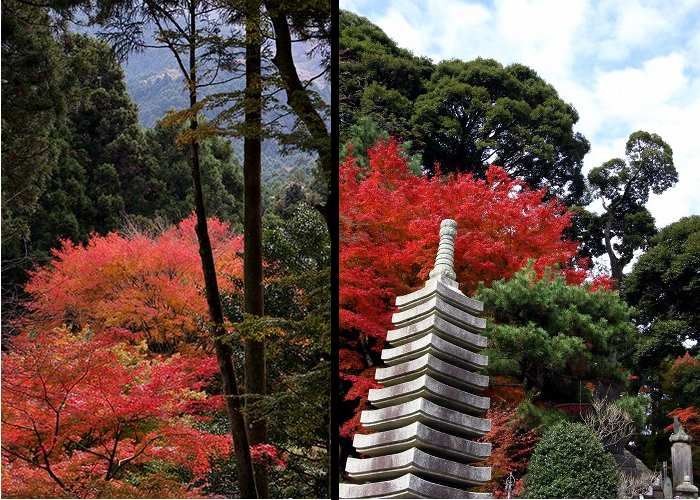 Raizan Temple Maples